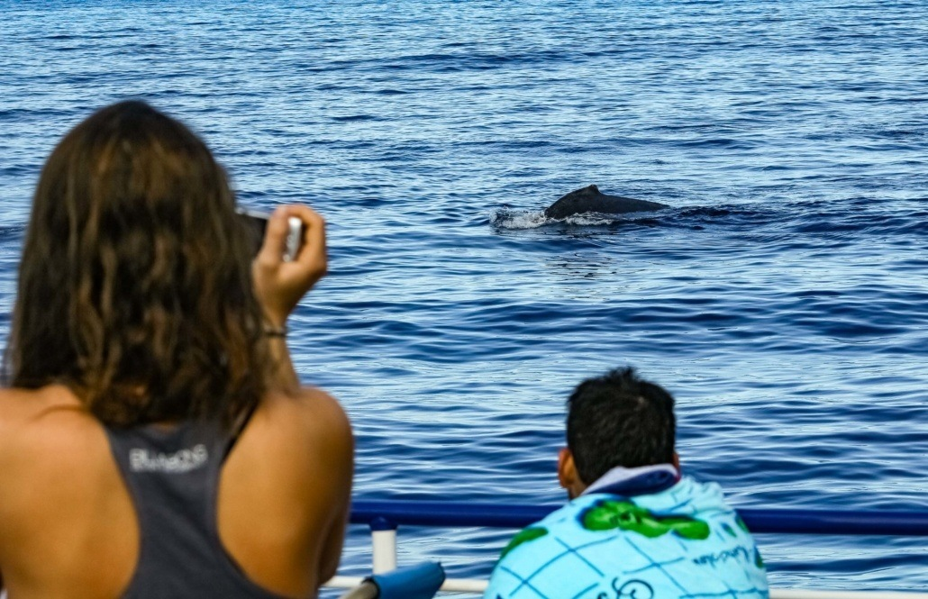 Whale Watching Visitors and Whale Maui