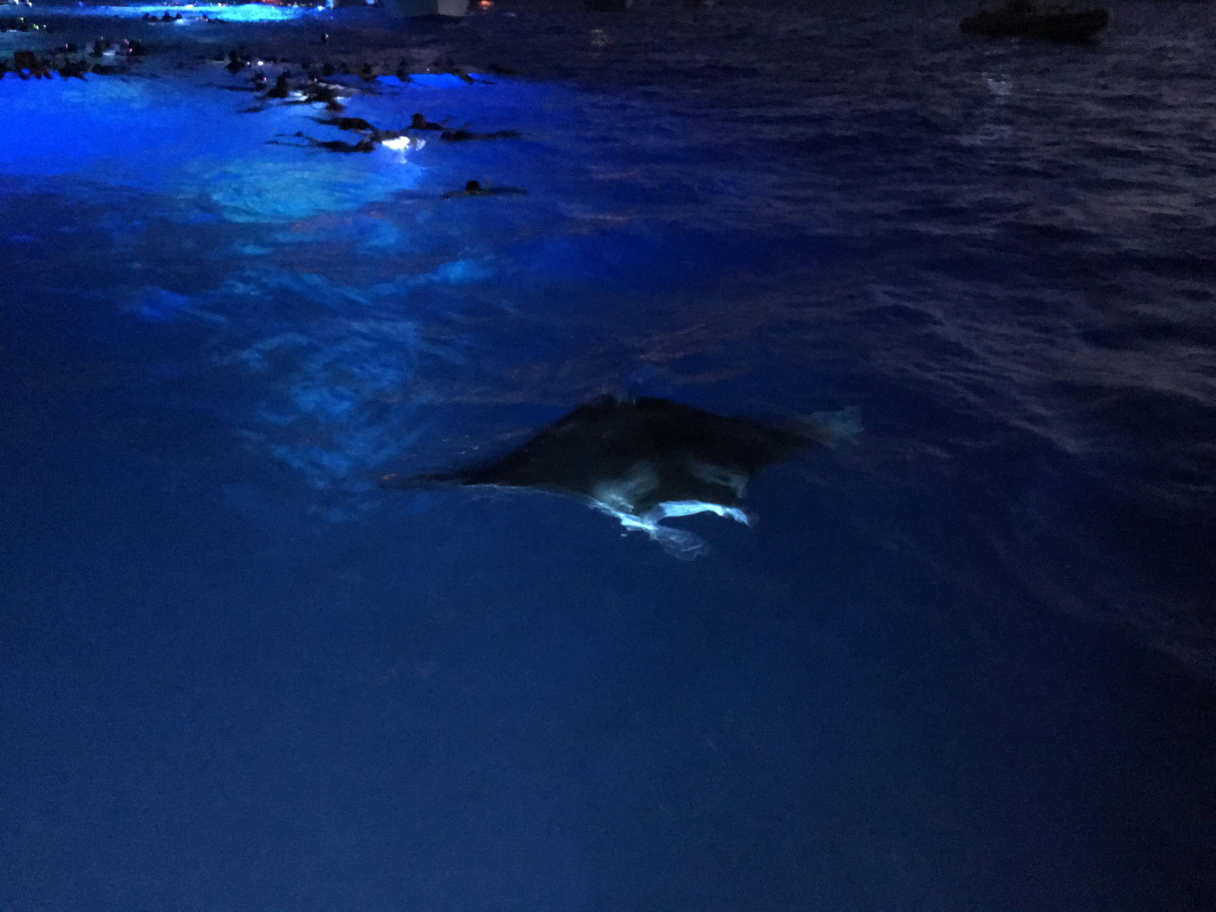 Island Manta Ray Night Snorkel Tour