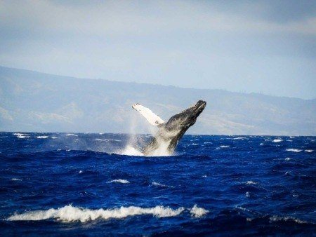 Whale Watching Sail