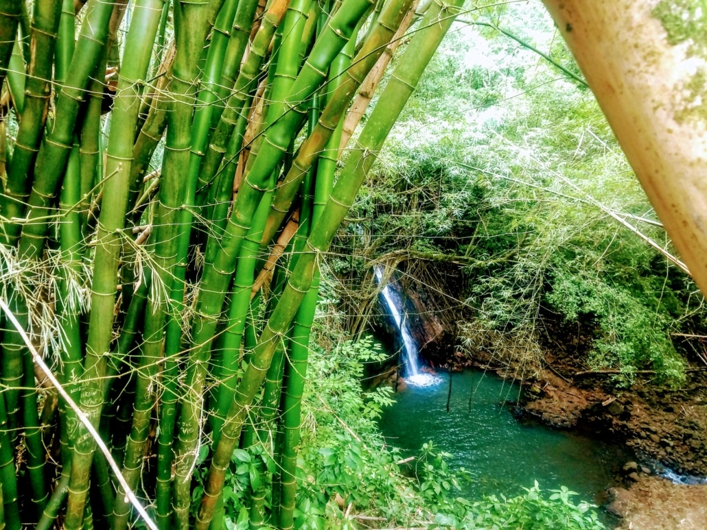 Bamboo Forest And Waterfalls Kauai Kipu Tours