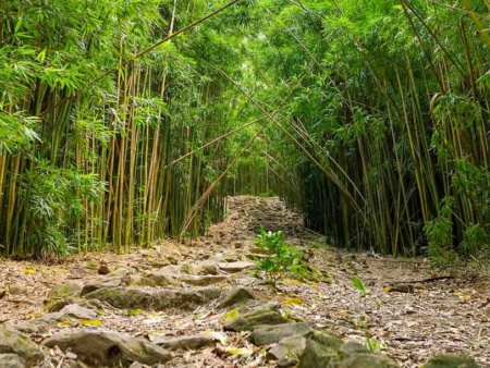 maui bamboo forest adventure