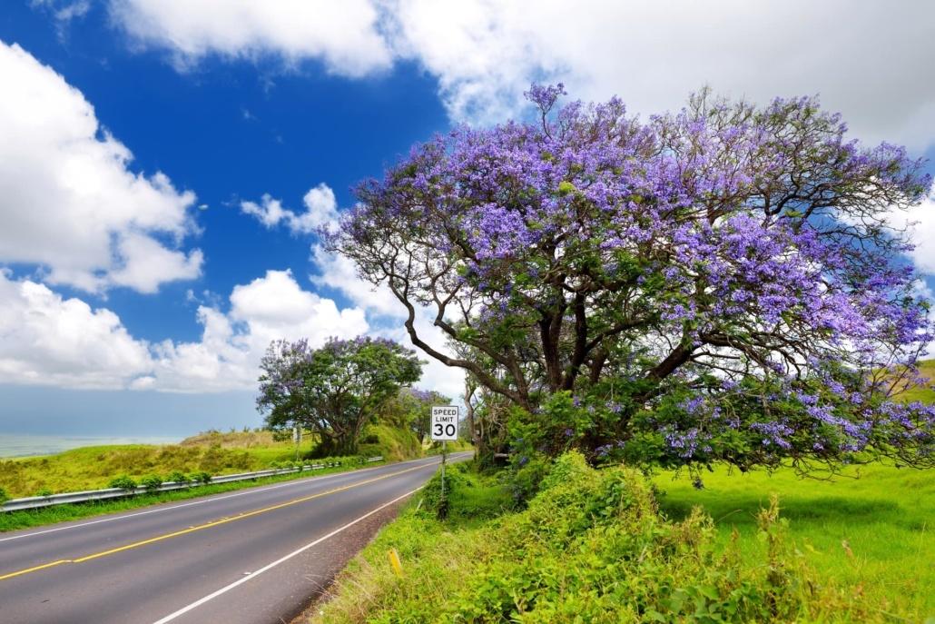 Haleakala Summit Path Road