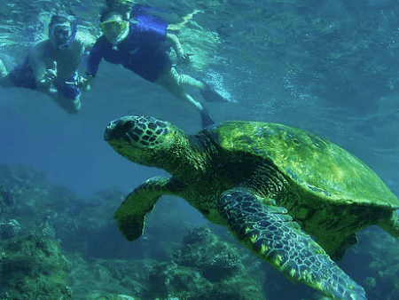 Aloha Hawaii Tours Snorkel Turtle