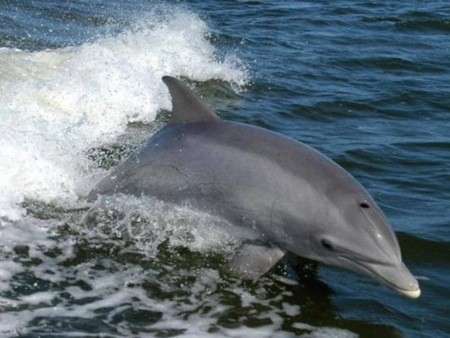 hawaii-ocean-rafting-dolphin-watch-snorkel