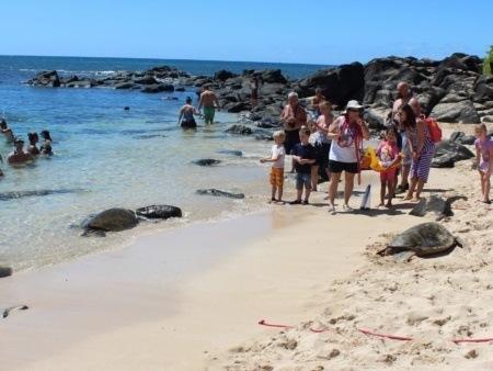 Hawaii Turtle Tours Beach Stop