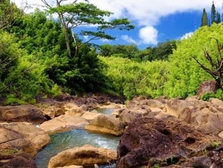 Holo Holo Bamboo Forest Hike