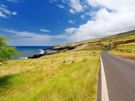 Holo Holo Maui Backside
