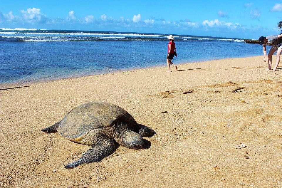 Turtle Circle Island Tour