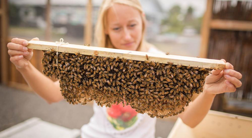 Working Bee Farm