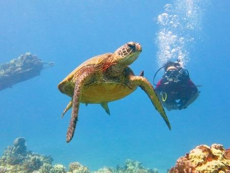 guided lahaina shore scuba dive banyan tree divers header