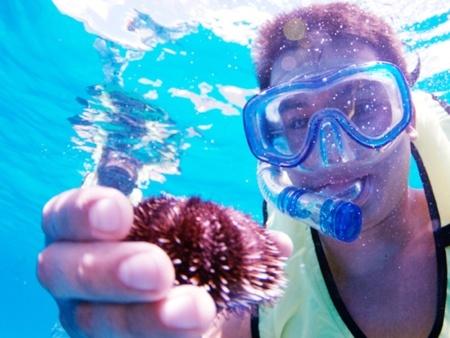 Hawaii Nautical Kawaihae Wildlife Watcha and Snorkel Cruise with Lunch Header
