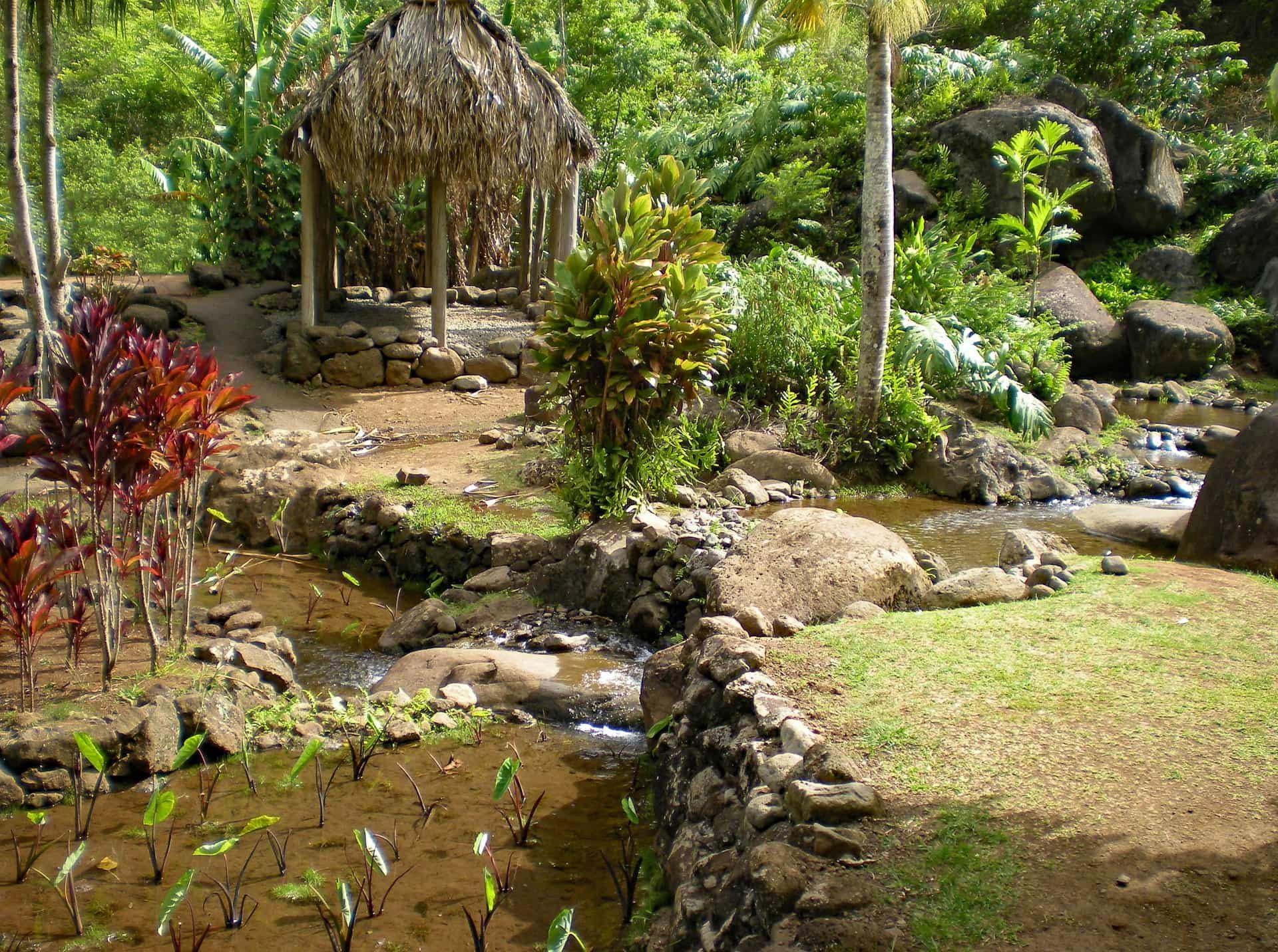 Holo Holo Maui Tours Private Excursion to Iao Valley