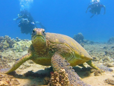intro to scuba diving in maui banyan tree divers header