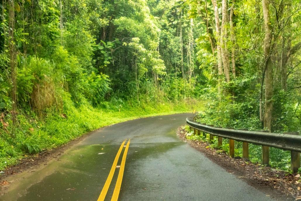 Haiku Road and Rainforest
